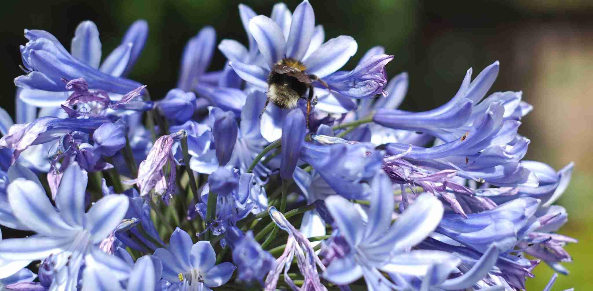 Beeston Bees