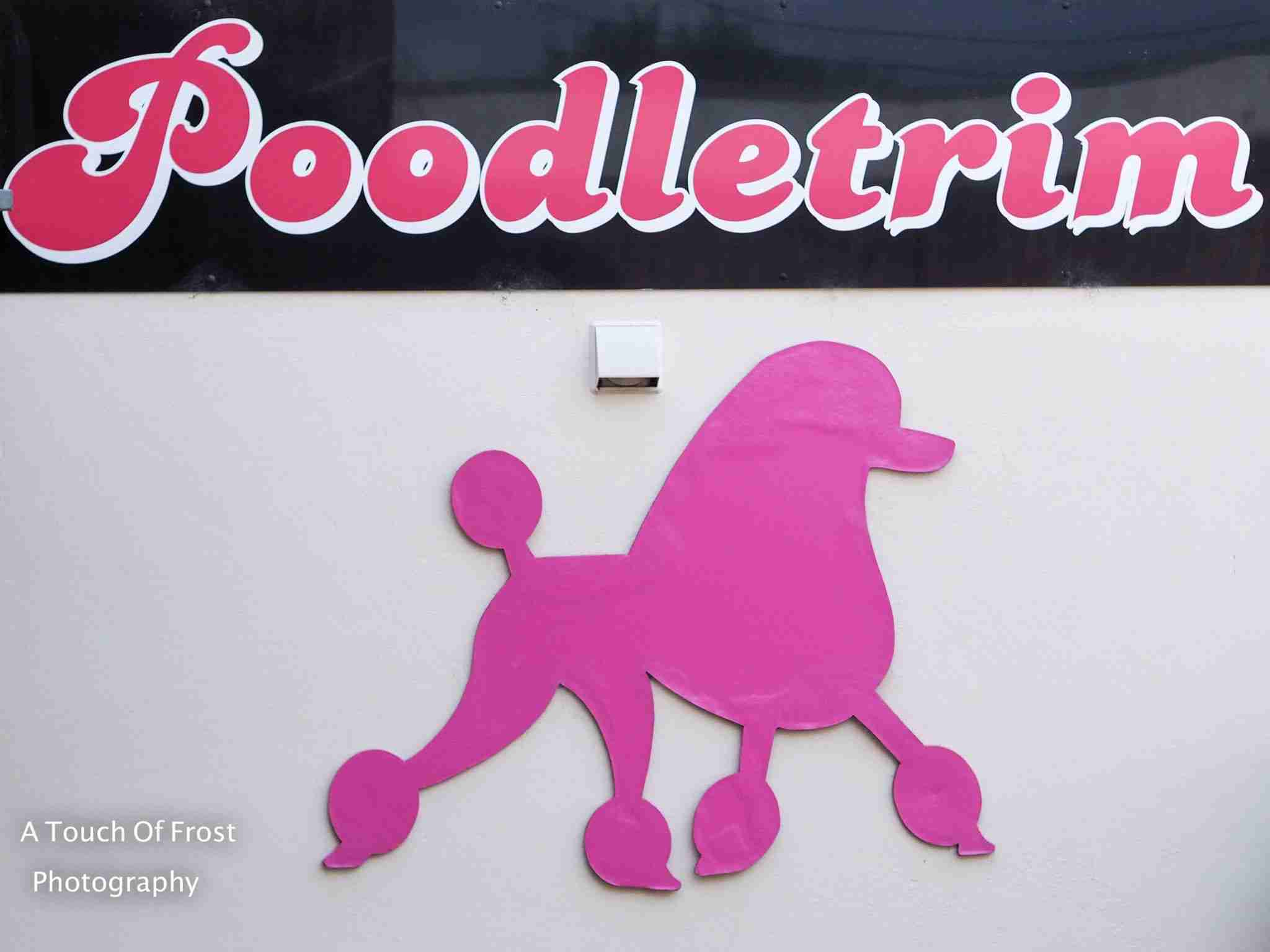 Poodledoodle: Interview with Poodletrim